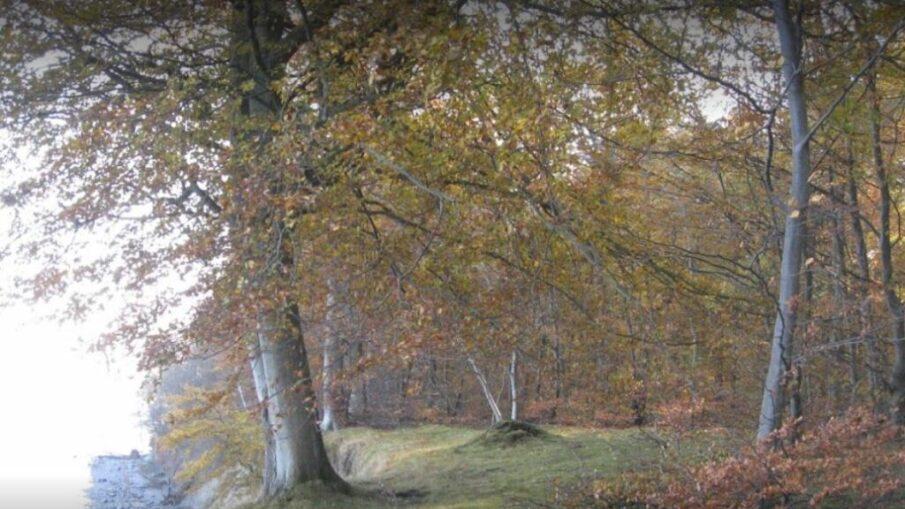 Skoven ved vintertide